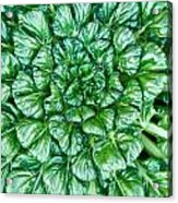 Glabrous Leaves Acrylic Print