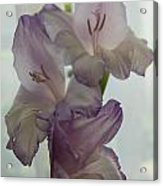 Glad Gladiola Acrylic Print