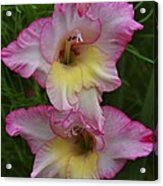 Gladiola Against Grasses Acrylic Print
