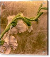 Gladiola Acrylic Print by Jill Balsam