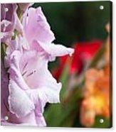 Gladiolus Bouquet Acrylic Print