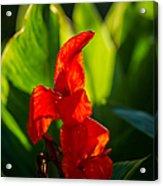 Gladiolus Flower Acrylic Print
