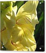 Gladiolus Named Nova Lux Acrylic Print