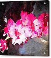 Glads Acrylic Print