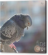 Glance From Above Acrylic Print