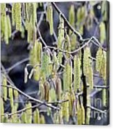 Glance In The Woods Acrylic Print