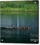 Gliding Across The Water Acrylic Print