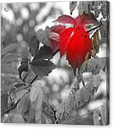 Glimpse Of Autumn Red Acrylic Print