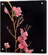 Glistening Blossoms Acrylic Print