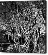 Gloomy Icy Tree Acrylic Print