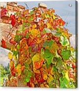 Glorious Autumn Leaves Acrylic Print