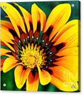 Glorious Day Yellow Flower By Diana Sainz Acrylic Print