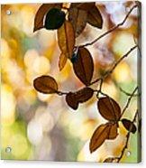 Glorious Foliage. Tree In Pamplemousse Garden 1. Mauritus Acrylic Print