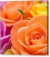 Glorious Roses Acrylic Print