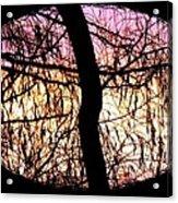 Glorious Silhouettes 3 Acrylic Print