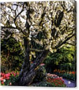 Glorious Spring Blooming, Stanley Park, Vancouver, British Columbia, Canada Acrylic Print