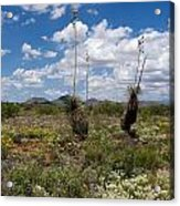 Glorious Spring In The Desert Acrylic Print