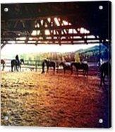 Glory In Horses Acrylic Print