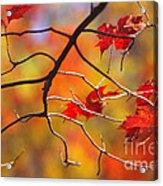 Glory Of Fall Acrylic Print