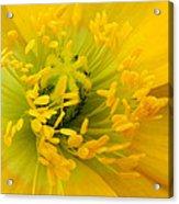 Glory Of Nature Acrylic Print