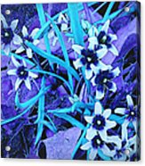 Glory Of The Snow - Violet And Turquoise Acrylic Print