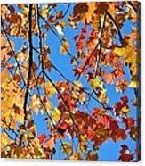 Glowing Autumn Acrylic Print