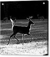 Glowing Buck Acrylic Print