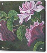 Glowing Camellias Acrylic Print