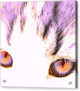 Glowing Cat Eyes Acrylic Print