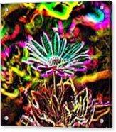 Glowing Flower Acrylic Print