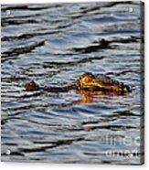 Glowing Gator Acrylic Print