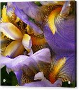 Glowing Iris' Acrylic Print