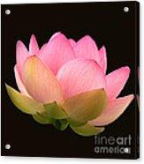 Glowing Lotus Square Frame Acrylic Print