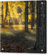 Glowing Maples Square Acrylic Print