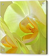 Glowing Orchid - Lemon And Lime Acrylic Print