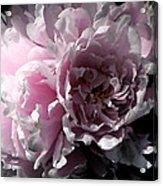 Glowing Pink Peony Acrylic Print
