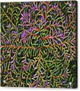 Glowing Vines Acrylic Print