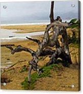 Gnarly Tree Acrylic Print by Barbara Snyder