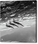 Gnats Inverted Black And White Version Acrylic Print