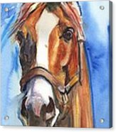 Horse Painting Of California Chrome Go Chrome Acrylic Print