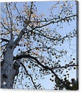 Go Climb A Tree Acrylic Print