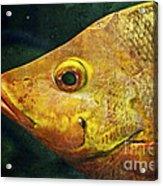 Go Fish Acrylic Print by Pam Vick