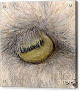 Goat Eye Farm Ranch Animal Art Cathy Peek Acrylic Print