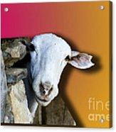 Goat Looking 3d Acrylic Print