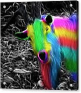 Goat Of Colour Acrylic Print by Jo Collins