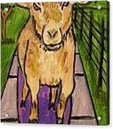 Goat Skateboarding Acrylic Print by Jay  Schmetz