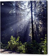 God Rays Through The Fog Acrylic Print