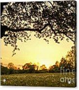 Goddess Tree 3 Acrylic Print