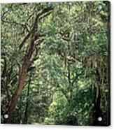 God's Canopy Acrylic Print