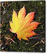 God's Perfect Leaf Acrylic Print